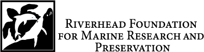 Riverhead Foundation